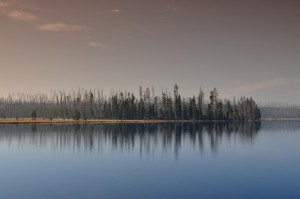 Horizontal Trees #2, Yellowstone National Park