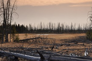 Tree Graveyard, Yellowstone National Park