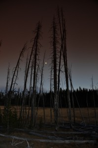 Trees and the Moon, Yellowstone National Park